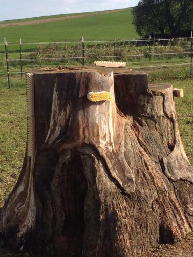 Unser Kratzbaum