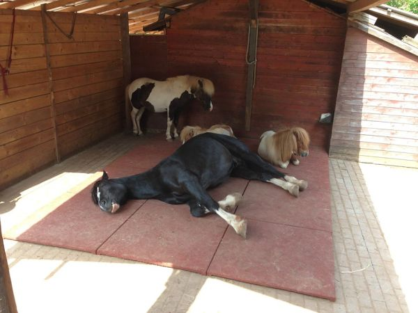 Einsam war gestern: Hengsthaltung heute – Horse Love – Der Blog