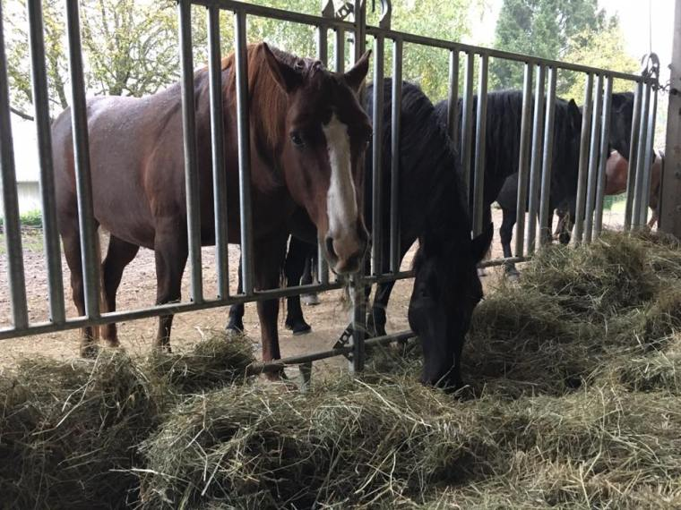 Pferde-Sicherheitsfressgitter